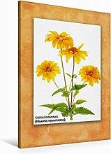 Leinwand Garten-Sonnenauge (Heliopsis helianthoides) 60x90cm, Special-Edition Wandbild, Bild auf Keilrahmen, Fertigbild auf hochwertigem Textil, Leinwanddruck, kein Poster