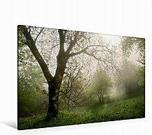 Leinwand geheimnisvoller Garten 120x80cm, Special-Edition Wandbild, Bild auf Keilrahmen, Fertigbild auf hochwertigem Textil, Leinwanddruck, kein Poster