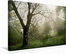 Leinwand geheimnisvoller Garten 45x30cm, Special-Edition Wandbild, Bild auf Keilrahmen, Fertigbild auf hochwertigem Textil, Leinwanddruck, kein Poster