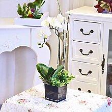 XPHOPOQ Künstliche Blumen Orchideen Modern Keramik Vasen Garten Dekoration Weiß