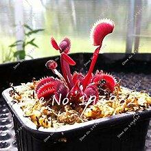 1: 100 Stücke Blau Insektenfressende Pflanze