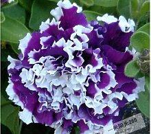 1: 100 Stücke Garten Petunia Blütenblätter