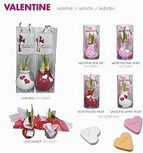 1 Amaryllis gewachst rot in Geschenkverpackung, Zimmerpflanzen ,Zwiebeln rot, besonders ausgefallene Geschenkidee, Amaryllis Hippeastrum, Dekoration für Wohnung und Büro, blühende Pflanze