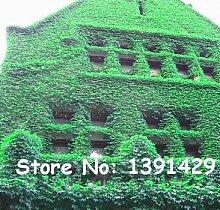 1 Beutel = 20 PC Bunte Boston Ivy Ahornsamen aus japanischen Creepers Kletterpflanze für DIY Haus & Garten Outdoor Plants
