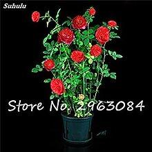 1: Exotische Rose Rosas Samen Frische Bonsai
