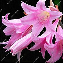 1: Neue 50 Teile/beutel Lilie Blumensamen Parfüm