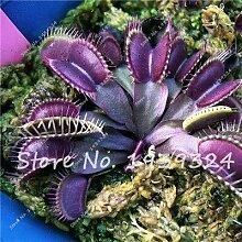 10: 100 Stücke Blau Insektenfressende Pflanze