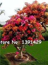 10: 100 Teile/beutel 22 arten Azalee Blumensamen