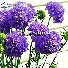 10 Blue Blumensamen schöne Farbe Hochzeit Flores Pflanze Hardy Pflanzen Blumensamen Exotische Zier Bonsai Heim Sementes