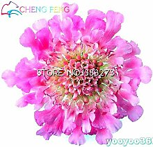 10 Blue Blumensamen schöne Farbe Hochzeit Flores