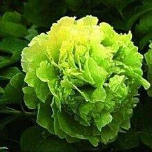 10 Particle / bag Blaue Pfingstrosen-Blumen-Samen Seltene Paeonia Topfhausgarten Pflanze, New Harvest Echt Samen, freies Verschiffen 6