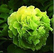 10 Particle / bag Blaue Pfingstrosen-Blumen-Samen Seltene Paeonia Topfhausgarten Pflanze, New Harvest Echt Samen, freies Verschiffen