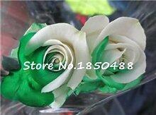 10 + PC / Rose Beutel Samen Blume Regenbogen-Rosen-Samen Pflanze Bonsai Blumentopfpflanze