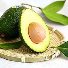 10 Stück Avocado Samen Grün Obst sehr lecker