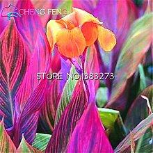 10 Stück Canna Samen Schöne Blumensamen-Mix