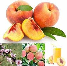 10 Stück Pfirsichsamen Sauger Obstbaum Hof