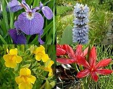 10 Töpfe Seltener Sumpfblüher - Farbmix 1 Sortiment Teich Pflanzen Teichpflanze