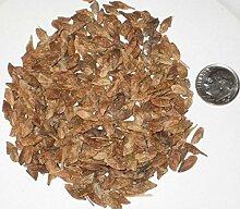 100 Amur Maple Bonsai Seed Pack Feuer-Ahorn