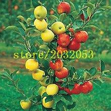 100 Apfelbaum Samen Dwarf Bonsai Apfelbaum MINI