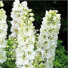 100 Blumensamen Samen Delphinium schöne Blume Pflanze Haus Pflanze Blumengarten