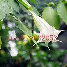 100 Datura Samen Seltene exotische Duftende Blumen-Pflanze Lila Mandala Mondblume Datura Samen Mischfarben (mindestens 5 Farben)