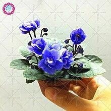 100% echte Usambaraveilchen Samen Bonsai Blumentopfgartenpflanze Staude für Hausgarten-Balkon Hof 100pcs