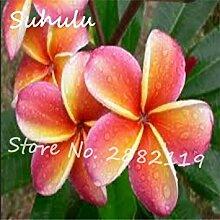 100 Partikel seltene schöne Blumensamen