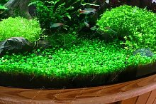 100 PC / bag Aquarienpflanzen Samen Gras Wasser Wasserpflanze Samen Innen-Zierpflanze Grassamen für Hausgarten 5