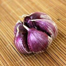 100 PC / bag Multi-Blütenblätter Knoblauch Samen Bio-Saatgut Gemüse Küche Würzen von Speisen Bonsai oder Topfpflanze für Hausgarten 1