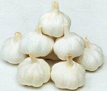100 PC / bag Multi-Blütenblätter Knoblauch Samen Bio-Saatgut Gemüse Küche Würzen von Speisen Bonsai oder Topfpflanze für Hausgarten 5