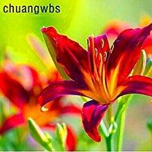 100 PC/Beutel Hemerocallis Seed Tawny Taglilie