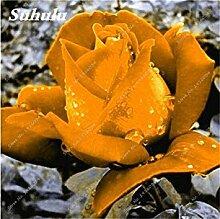 100 PC/Beutel Rare Farbe Rosen-Samen im Freien