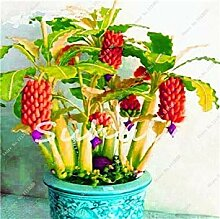 100 PC-seltene Regenbogen-Banane Bonsai, Sementes