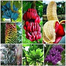 100 Pcs Banana Samen Obst Samen Exotische Früchte