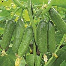100 Pcs Mini Gurke-Samen Köstliche Gurke Obst Und