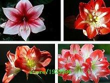 100 PCS New Seeds 2015! Thymiankraut die Samen von