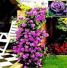 100 Samen / pack Mix Kletterpflanze Polyantha Rose sät DIY Hausgarten Hof Topf Blumensamen Schöne Bonsai Samen Red