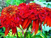 100 Samen/Packung Neue Samen 2015!Echinacea Samen