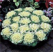 100 Stück Blumen & Gemüse Aquilegia blühende