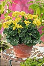 100 Stück Geranium Samen Stauden Geranium Blumen Pflanzen Pelargonium Blumen-Garten-Dekoration Bonsai Samen DIY Topfpflanze 19