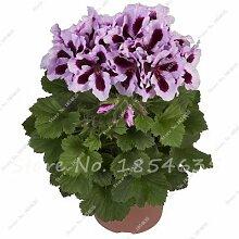 100 Stück Geranium Samen Stauden Geranium Blumen Pflanzen Pelargonium Blumen-Garten-Dekoration Bonsai Samen DIY Topfpflanze 18