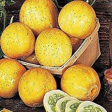 100 Stück Gurke Bio-Gemüsesamen für schönen
