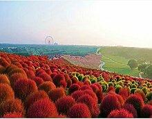 100 Stück Kaninchen Schwanz Gras Schwingel Gras