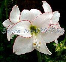 100 Stück Liliensamen in Bonsai Zimmerpflanzen Blumen Calla-Lilien-Samen schöne Gartenblume sementes für Männer * Kinder Geschenk Pflanze Dunkel Khaki