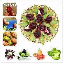 100 Stück Opuntia Samen Seltene Feigenkaktus