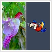 100 Stück Papageien orchidee seltene Orchideen Samen Zierpflanze Blumensamen