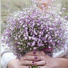 100 Stück Samen / Farbe Gypsophila (Baby Atem) Garten-Dekoration Beliebte Easiest wachsende Schnittblume Hohe Germination 100 PurpleGypsophila