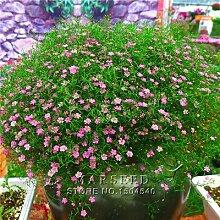 100 Stück Samen / Farbe Gypsophila (Baby Atem) Garten-Dekoration Beliebte Easiest wachsende Schnittblume Hohe Germination 100 Hellrosa