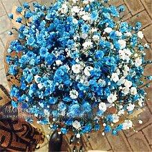 100 Stück Samen / Farbe Gypsophila (Baby Atem) Garten-Dekoration Beliebte Easiest wachsende Schnittblume Hoch Germination 100 Blaus Gypsophila