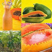 100 Stück Zwerg Papaya Obst Samen Süßpflanze